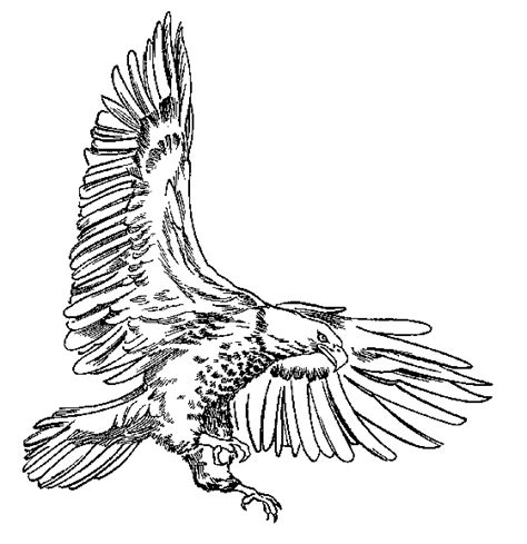 Drawing B W by Bald Eagle Clipart Black And White Clipart Best