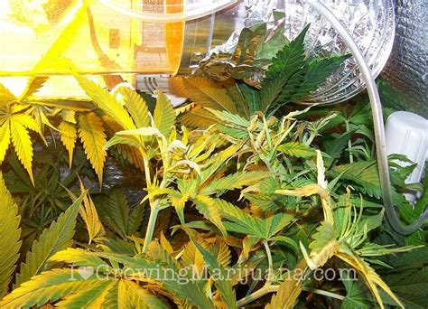 how to lower humidity in a grow room or humid marijuana grow room