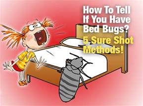 how to tell if you bed bugs 5 sure methods