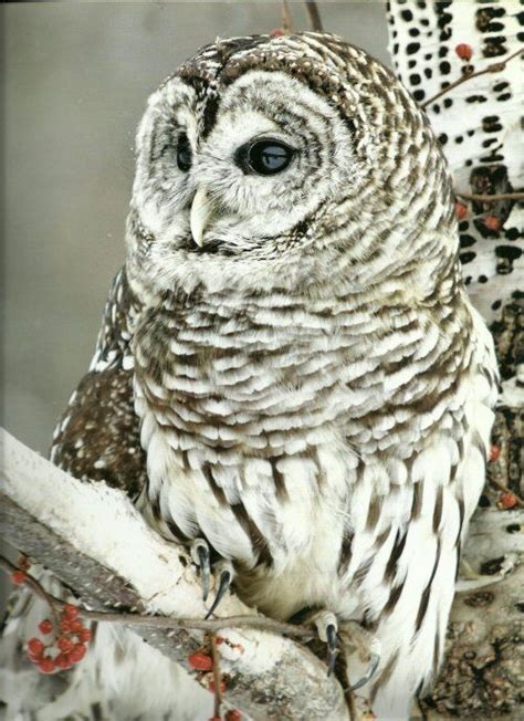 17 Best Images About Owl Meaning On Pinterest Keep Calm Owl Meanings