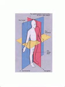 avril 171 2009 171 cours d anatomie et de dissection du