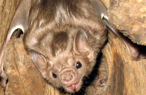 10 animals that hibernate conservation institute