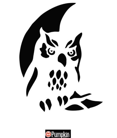 owl pumpkin pattern pumpkin craze