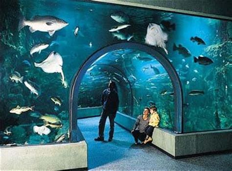 aquarium le oc 233 arium du croisic a visiter 224 la baule et ses