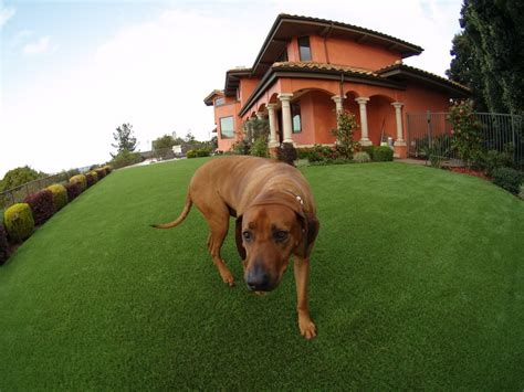 dog runners for backyards artificial grass for a dog running area installed in a