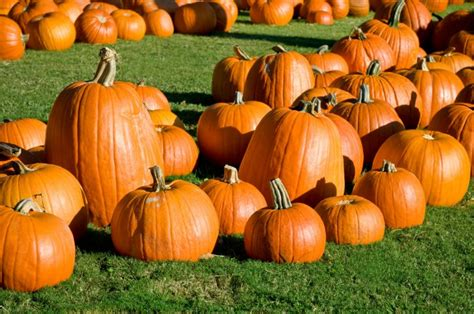 pumpkin patches how to save at the pumpkin patch