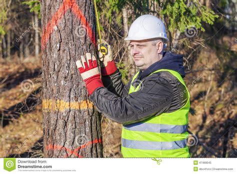 råskog skogsarbetare med en m 229 ttband n 228 ra granen i skog