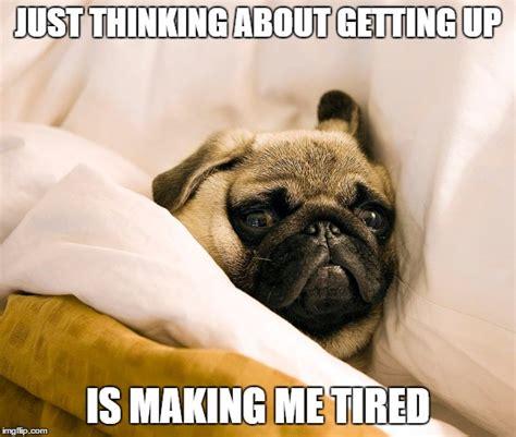 Funny Pug Meme - 8 funny pug memes what every dog deserves