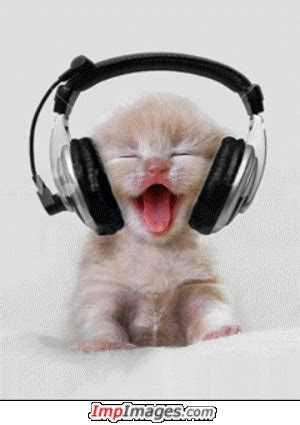 gambar animasi kucing bergerak lucu gambar lucu kucing