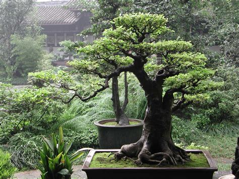bonsai tree plants and flowers