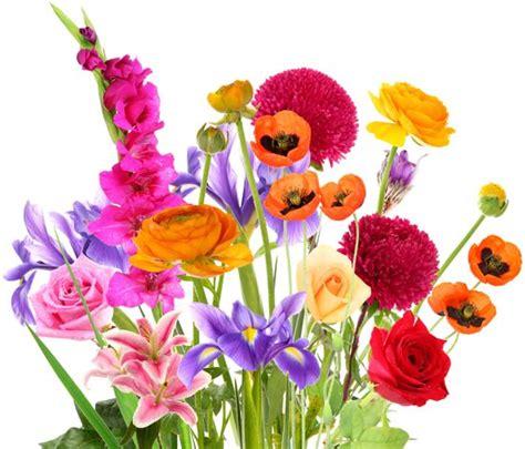 fiori sulla commenti