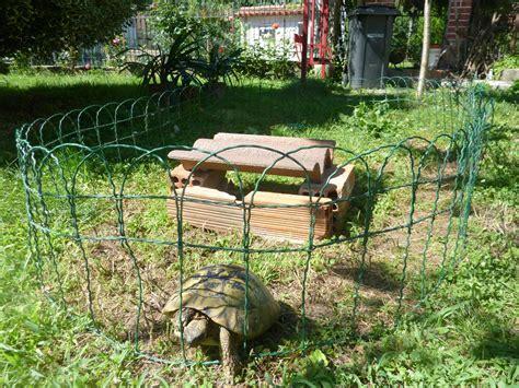 gabbie per tartarughe di terra consiglio su recinto e deposizione con casetta per