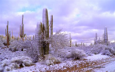 desert snow arizona beetles bugs birds and more desert snow 2015