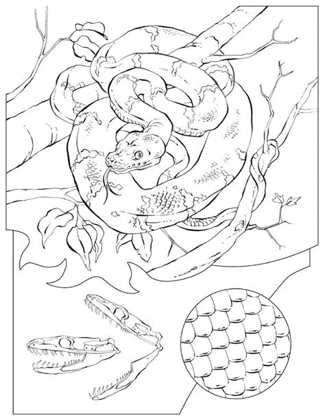 Reptile Coloring Pages For Kids Az Coloring Pages Reptile Colouring Pages