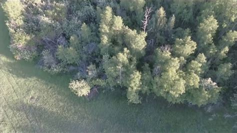 big pictures drone footage of idaho bigfoot important update