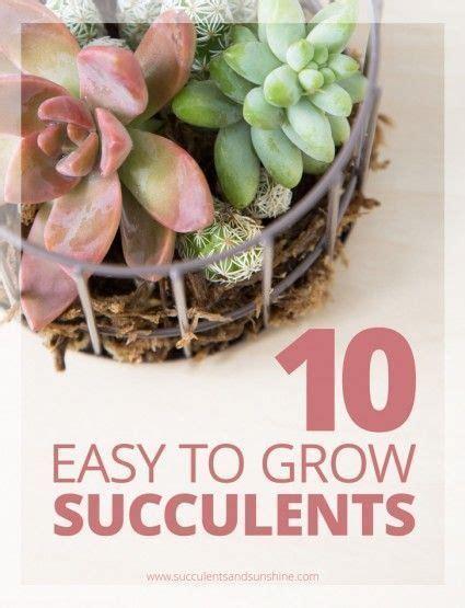 437 best images about succulents diy on pinterest growing succulents succulent wall planter