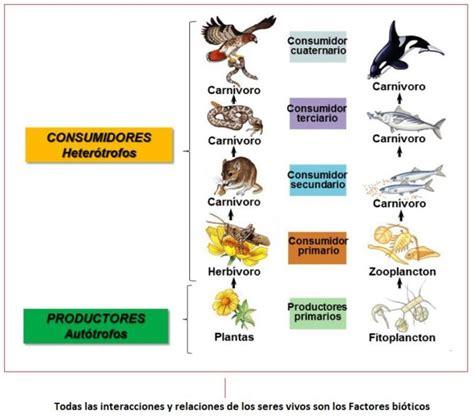 cadenas alimenticias carnivoros heter 243 trofos qu 233 organismos son nutrici 243 n clasificaci 243 n
