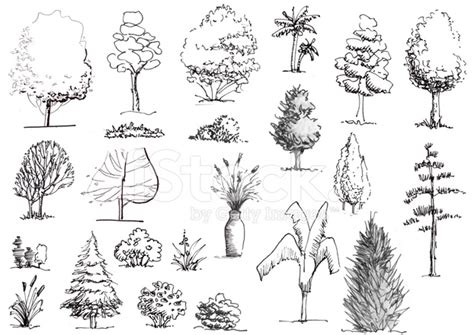 tree architecture drawing trees and shrubs black and white elevation