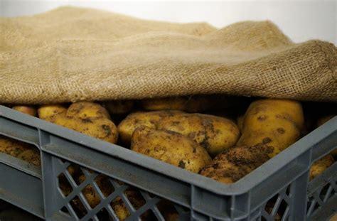 Kartoffeln Richtig Lagern 4999 by Kartoffeln Richtig Lagern So Funktioniert Es Seit Jeher