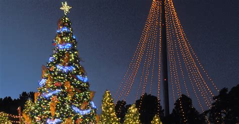 best christmas trees in san diego merry mission bay for the holidays in san diego