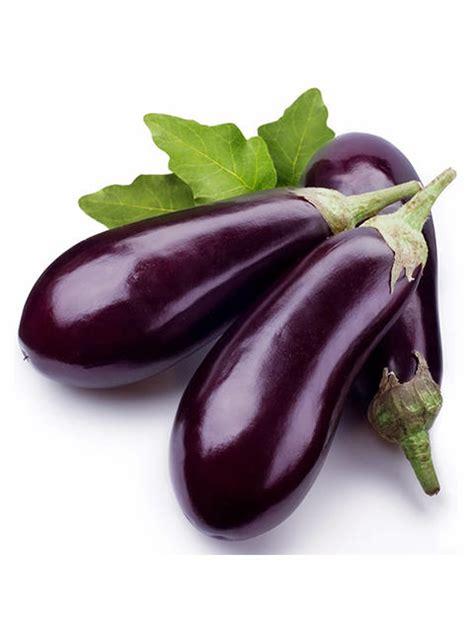 Bibit Kelengkeng Ungu 6 cara menanam terong ungu agar berbuah lebat