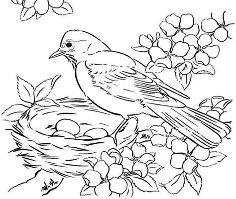 coloring pages birds printable free realistic birds coloring pages
