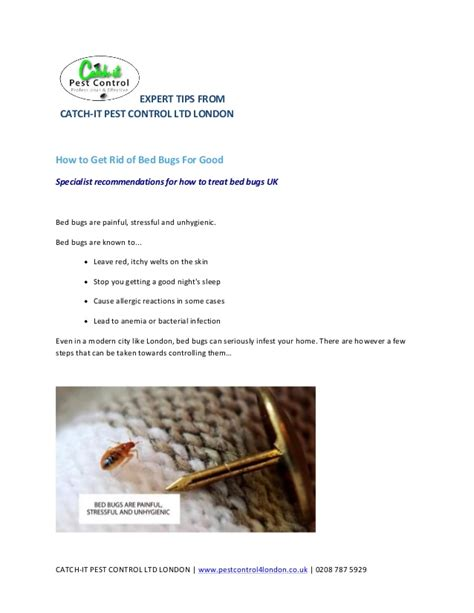 get rid of bed bugs for good how to get rid of bed bugs for good