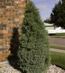 Backyard Makeover Contest by Ideas 4 You Landscaping Evergreen Trees Pictures