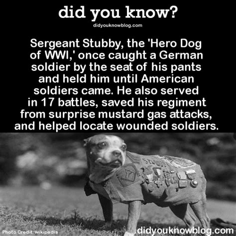 Sergeant Stubby German Did You Sergeant Stubby The Of Wwi Once