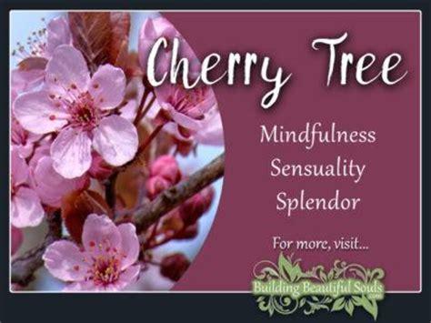 cherry tree symbolism tree symbolism meanings dogwood oak sequoia cherry poplar