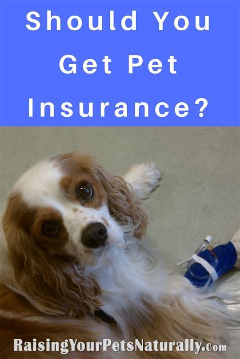 pet insurance dog insurance cat insurance  pet