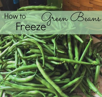 how to freeze green beans how to have it all
