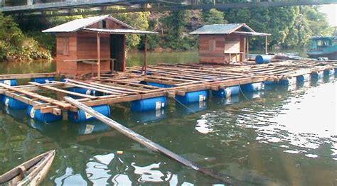 Bibit Ikan Nila Kendal keuntungan dan kerugian pembesaran ikan dengan kolam