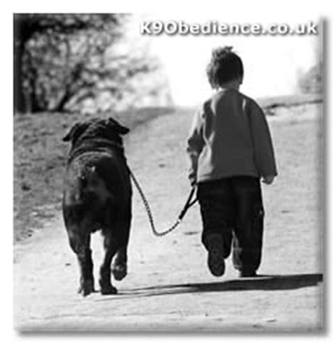 how to your to walk on the lead a to walk to heel on lead how to your heeling perfectly on a