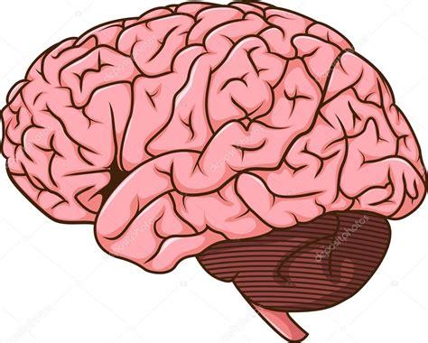 imagenes de el cerebro humano dibujos del cerebro humano vector de stock