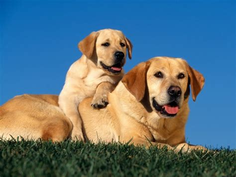 wallpaper dogs all wallpapers beautiful dog hd wallpapers