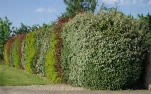 les arbustes de haies le jardin du chat