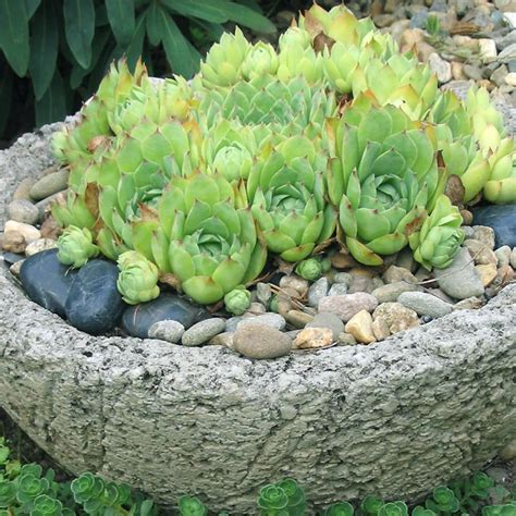 Hypertufa Planters How To Make by For A Hypertufa Planter Diy