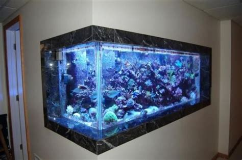 inside wall aquarium have the ultimate fish tank built 17 best images about in wall fish tanks on pinterest