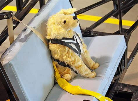 car restraint harnesses pet restraint safety consumer reports news