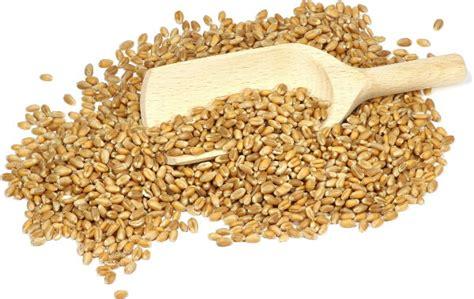 fibre alimentare che cosa sono le fibre alimentari