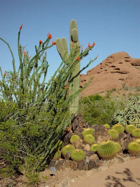 Desert Botanical Garden Membership Desert Botanical Garden Admission Fee Garden Ftempo