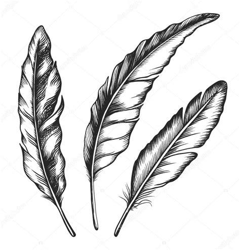 feather tattoo vector vintage feather set stock vector 169 borsvelka 31229137