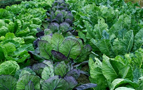 Best Vegetable Garden Png Hi Res 720p Hd Best Vegetable Garden