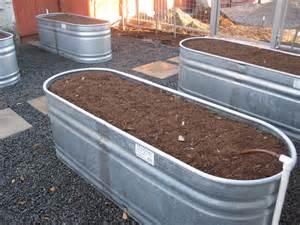 Self Watering watering troughs as veggie beds ravenscourt gardens
