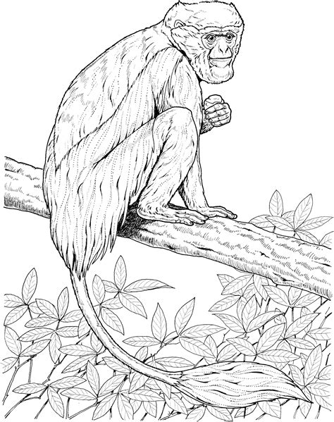 howler monkey page coloring pages