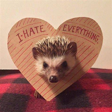 hedgehog picture book bookish hedgehogs of instagram