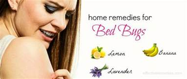 home remedies for bed bug bites 27 home remedies for bed bugs bites removal on