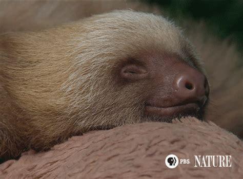 sleepy gif sleepy sloth gif by thirteenwnet find on giphy