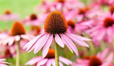 13 effective home remedies to treat impetigo naturally